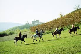 Turismo a cavallo tra i vigneti
