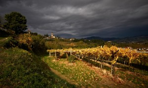 Cesari Fine Wines of Verona