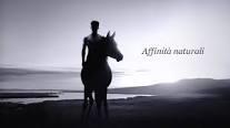 Fiera  cavalli 2014
